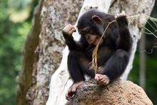 Full Length Of Monkey Sitting ...