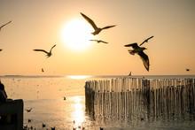 Seagulls Flying At The Pangpoo