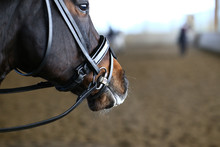 Horse Head In Portraits From T...