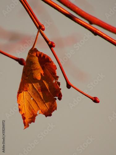 foglie in autunno Canvas-taulu