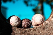 Close-Up Of Seashells On Retaining Wall Against Sky