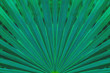 canvas print picture - tropical palm leaf and shadow, abstract natural green background