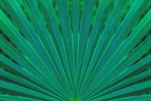 Tropical Palm Leaf And Shadow,...
