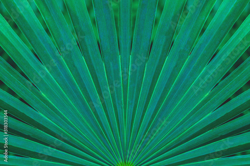 Papier Peint - tropical palm leaf and shadow, abstract natural green background