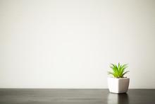 Spa. Succulent Plant On Window...
