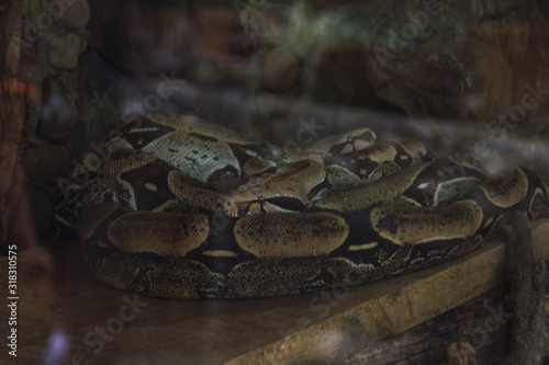 SERPIENTE Canvas Print