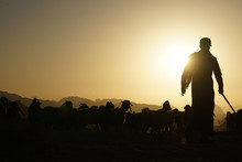 SILHOUETTE OF A SHEPHERD WITH FLOCK OF SHEEP