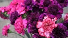 Blüten Der Nelken, Rosa, Pink, Violett - Dianthus