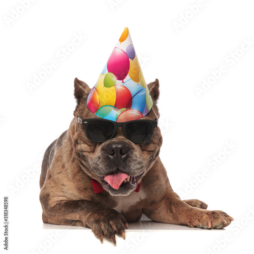 Photo cute american bully wearing birthday hat and sunglasses