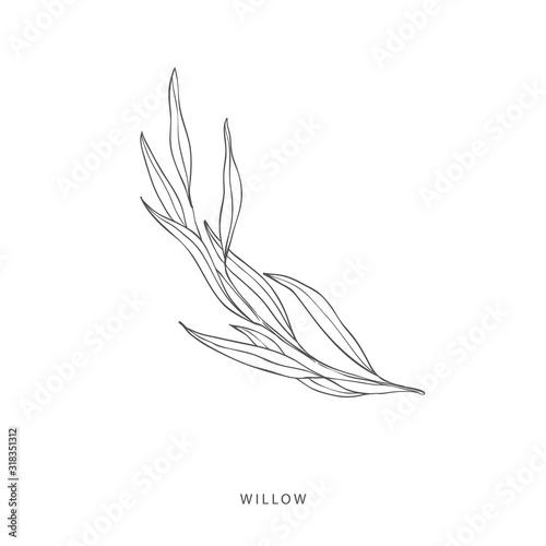 Obraz na płótnie Greenery design elements. Botanical logos.