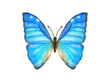 Hand Drawn Watercolor Butterfl...