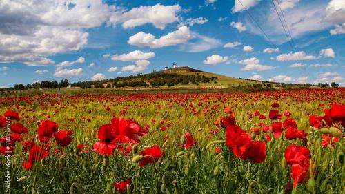 Campo de amapolas en La Mancha con molinos en la cumbre del monte
