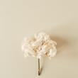 Leinwanddruck Bild - White hydrangea flower branch on pastel beige background. Flat lay, top view minimal floral card.