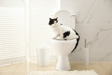 Cute Cat Sitting On Toilet Bow...