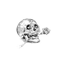 Skull With A Rose In The Mouth...