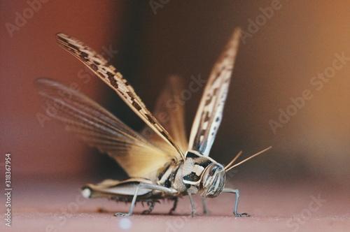 Close-Up Of Grasshopper On Surface Fototapet