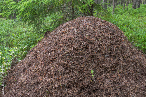 large anthill in the forest on a green grass background in a forest on a summer day Wallpaper Mural