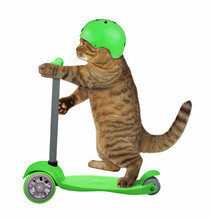 The Beige Cat In A Bicycle Helmet Is Riding A Green Electric Scooter. White Background. Isolated.