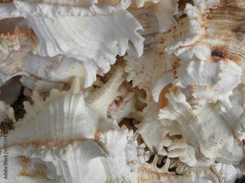 Fotomural Full Frame Shot Of Seashell