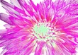 canvas print picture - Abstract fantastic flower background with color splash effect.