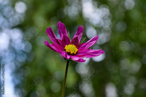 Photo A macro shot of the centre of a lilac coloured cosmos bloom.