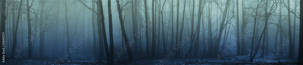 Fototapeta panorama of forest fog in the winter forest, mysterious mystical landscape of greenish color