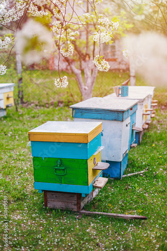 Beekeeping in spring in April Canvas Print