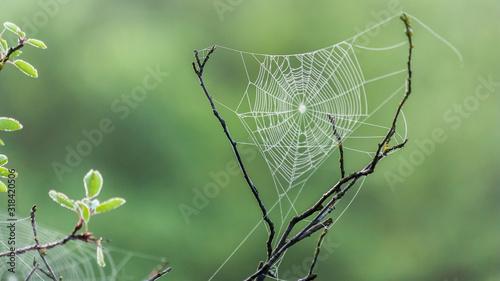 Fotografering CLOSE-UP OF SPIDER ON WEB