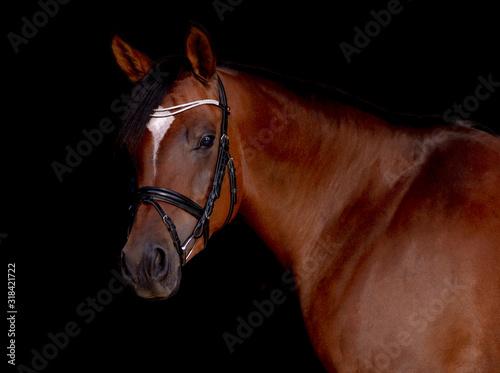 Arabian Horse Black Background