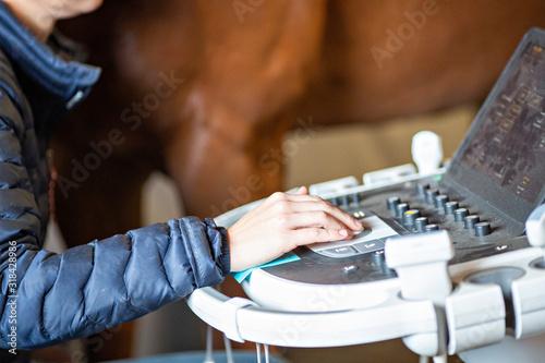 Slika na platnu Equine Ultrasound Exam