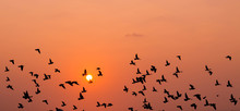 Low Angle View Of Silhouette Birds Flying In Orange Sky