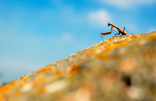 Low Angle View Of Praying Mantis On Rock Against Sky