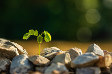 Green Sprout Growing In Soil Pile Of Rock On Green Blur Background. Growing And Environment Concept