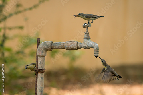 Naklejka premium CLOSE-UP OF BIRDS PERCHING ON FAUCET