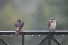 Close-Up Of Birds Perching On Railing