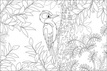 Funny Woodpecker Climbing On A Tree And Drumming A Trunk To Find Insects For Dinner In A Summer Forest, Black And White Vector Cartoon Illustration For A Coloring Book Page