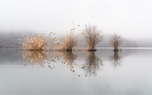 Leafless Trees And Reeds In A ...