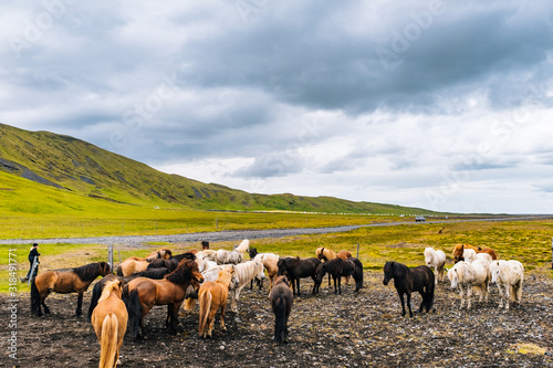 Horses On Field Against Sky - fototapety na wymiar