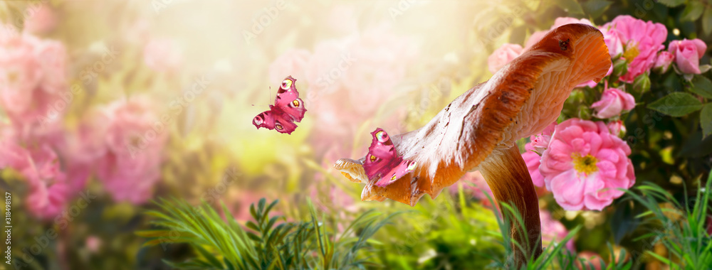 Fototapeta Magical fantasy large mushroom in enchanted fairy tale garden with fabulous fairytale blooming pink rose flower field on blurred mysterious banner background and shiny glowing sun beam in the morning
