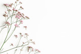Fototapeta Kawa jest smaczna - Flowers composition. Pink flowers on white background. Flat lay, top view