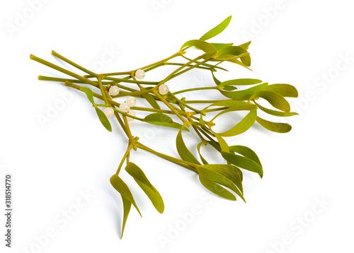 Fotografia, Obraz Viscum album, commonly known as European mistletoe, common mistletoe or simply as mistletoe, mistle