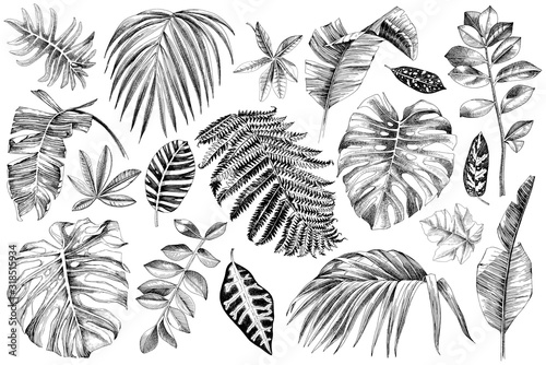 Obraz Hand drawn set of tropical leaves and plants - fototapety do salonu