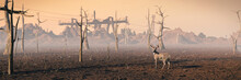 Deer In Dead Forest, Climate C...