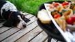 Głodny pies rasy Basset Hound patrzy na grill z warzywami, chlebem, kurczakiem i mięsem. W tle zieleń, trawa, krajobraz wakacyjny, urlopowy. Taras domku letniskowego.
