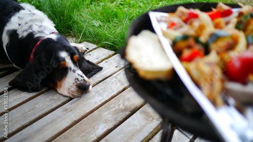 Fototapeta Głodny pies rasy Basset Hound patrzy na grill z warzywami, chlebem, kurczakiem i mięsem. W tle zieleń, trawa, krajobraz wakacyjny, urlopowy. Taras domku letniskowego. obraz