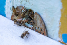 Honey Bees Swarm In The Hive. ...