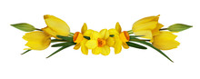 Yellow Narcissus And Tulip Flo...