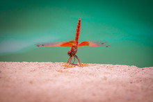 Red Dragonfly Next To Clear Bl...