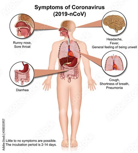 coronavirus medical vector illustration with description isolated on white backg Canvas Print