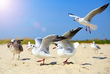 Seagulls At Beach Against Sky